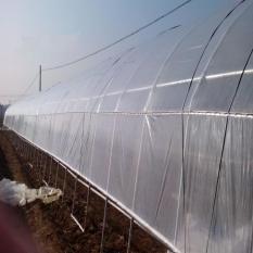 Greenhouse Anti UV Treated Polyethylene Plastic Film 10