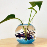Clear Glass Flower Planter Vase Terrarium Container Fish Tank Table Decor image