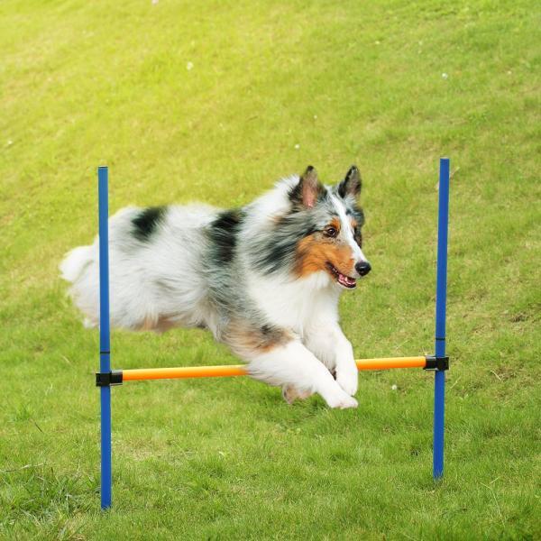Thú Cưng ngoài trời Chó nhanh nhẹn trò chơi thể thao thiết bị đào tạo chó nhảy vượt rào thanh Vâng Lời hiển thị hoạt động nhanh nhẹn tập thể dục cực với hộp đựng