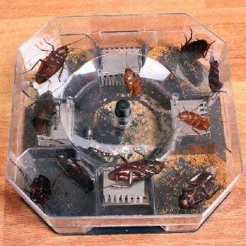 Cockroach Trap Box By Sangie Enterprise.