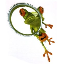 3D Frog Car Graphic Sticker