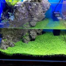 Grasses Aquarium Plants Fish Tank Decoration Landscape Ornamental Plants Seeds - Intl By Zoahu.