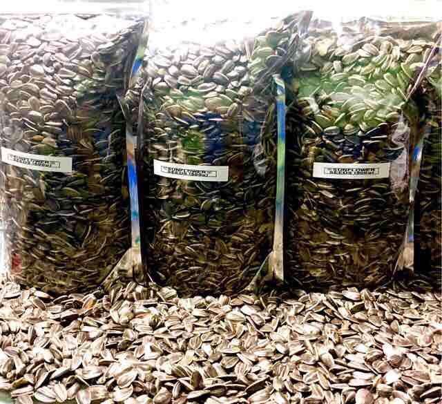 Sunflower Seeds Large 700g (parrot) By Treatsnthings.