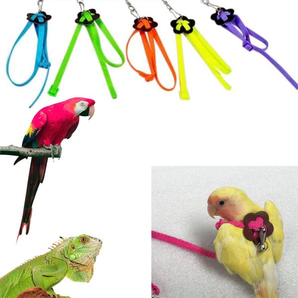 1 CÁI Creative Bird Collar Khai thác Dây kéo Dây đeo Vật nuôi Dây xích Dây đeo ngoài trời chống cắn 8 loại cho Hamster Lizard